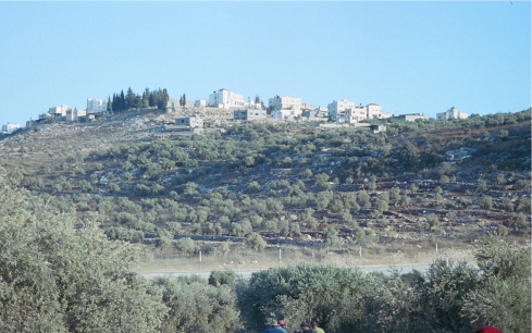 Jayyous, surrounded by olive groves