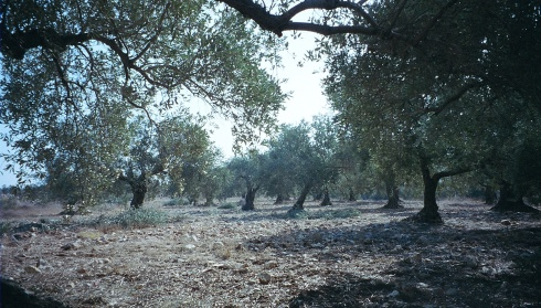 In Chapters 2 and 3, I got through the Wall most of the time and had an amazing time harvesting olives in this beautiful land.