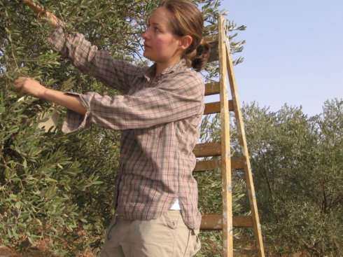 Combing the branches of graceful and generous olive trees
