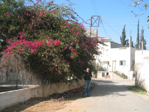 The flowering bush that marks the turn to get to the mayor's house.