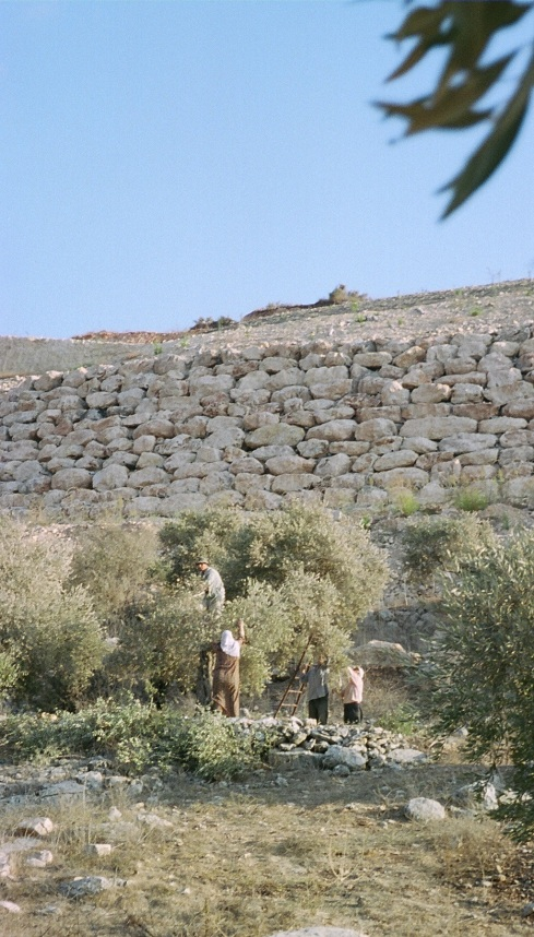 A piece of Qais's family land where they now have only seven trees. They used to have twenty here, before the Wall.