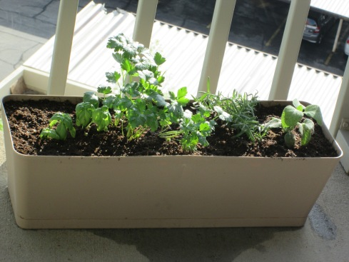 Our little herb garden